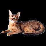 Zdravlje i higijena mačaka